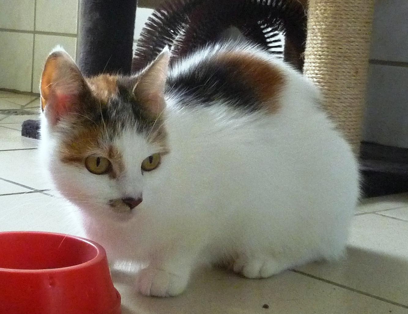 ... von 15 bis 17 Uhr die Bekanntschaft dieser zauberhaften Katzendame
