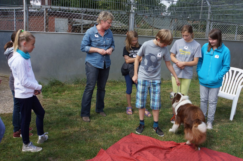 FP 2014 - Hundegruppe 15