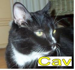 Cav - TP