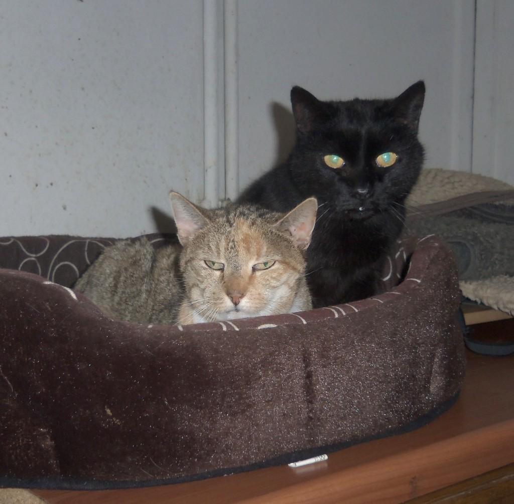 Anton + Kitty - 03