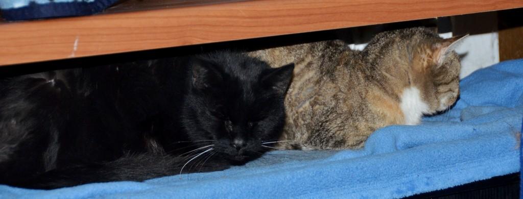 Anton + Kitty - 09