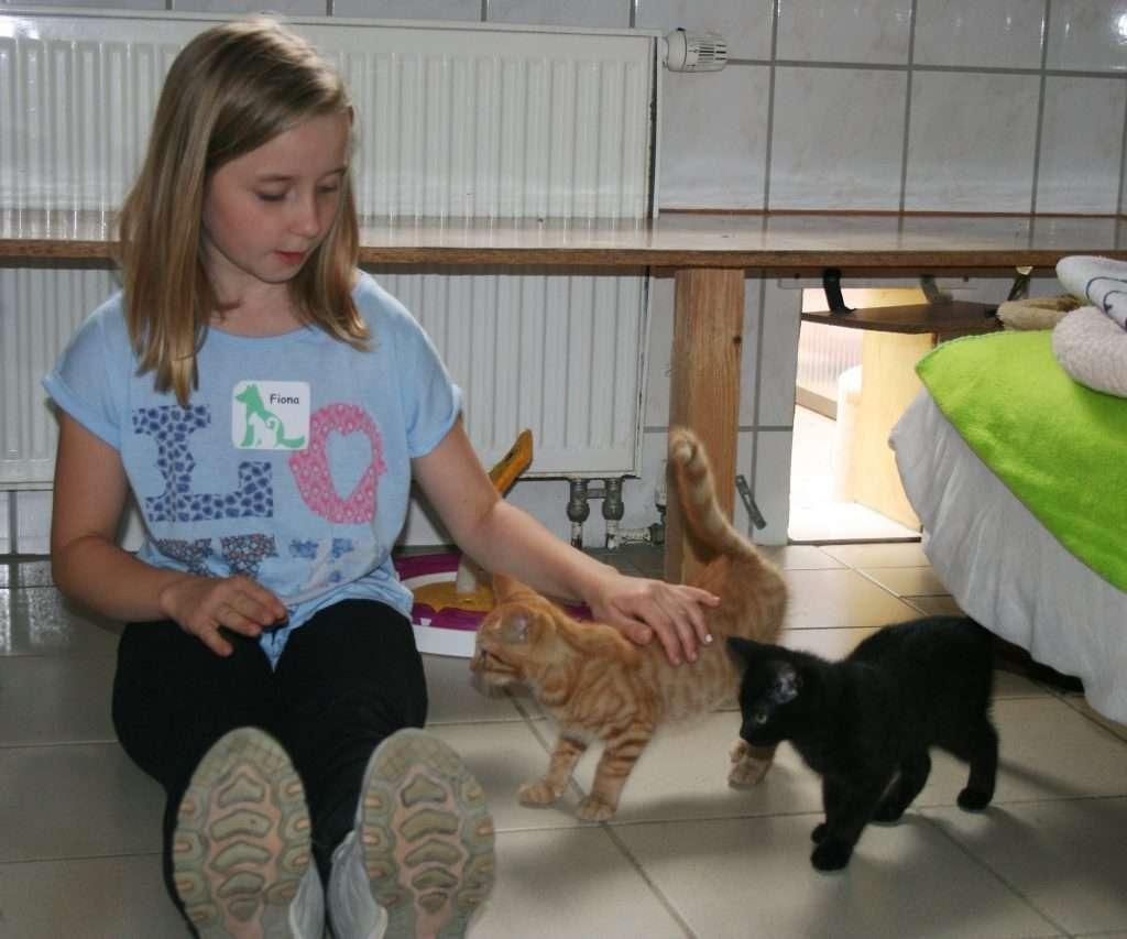 FP 2016-07 - Katzen bespaßen 03