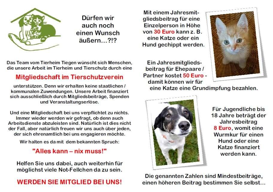 Weihnachtswünsche Jugendliche.Die Weihnachtswünsche Unserer Tiere Tierschutzverein Soltau