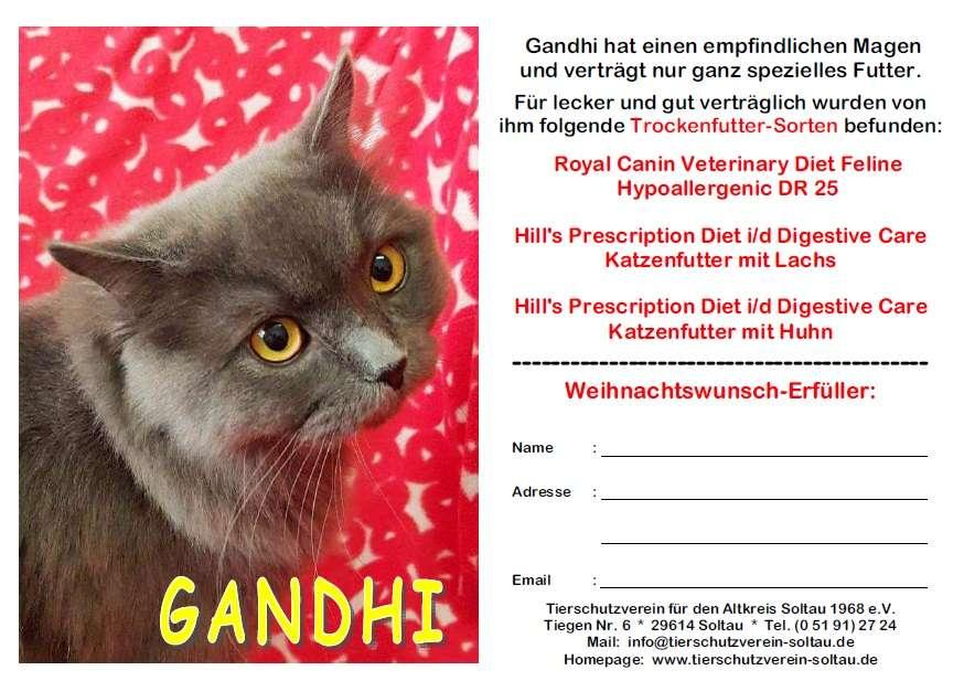 24 Weihnachtswünsche.Die Weihnachtswünsche Unserer Tiere Tierschutzverein Soltau
